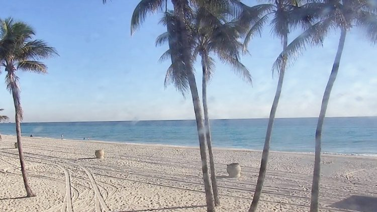 hollywoodbeatch
