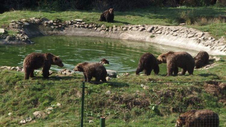 sanctuar-de-ursi